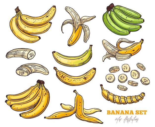 Esboço bananas vários conjuntos. cachos de fruta, meio descascada, banana aberta e cortada, ilustração colorida desenhada à mão
