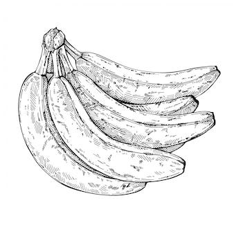 Esboço cacho de bananas. bananas de mão desenhada. ilustração gravada a tinta