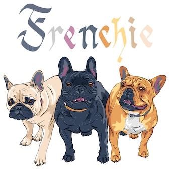 Esboço cão doméstico raça bulldog francês