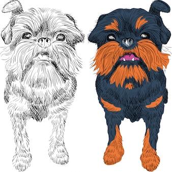 Esboço cão vermelho raça bruxelas griffon