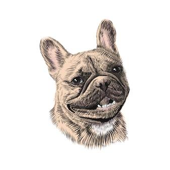 Esboço de animal de estimação desenhado de mão buldogue francês