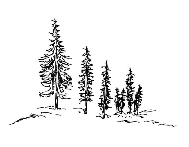 Esboço de árvores de natal de pinheiros silhueta de vetor de floresta de abetos detalhada
