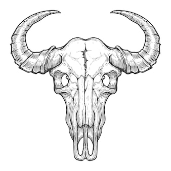 Esboço de caveira de búfalo