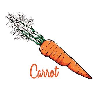 Esboço de coloração ou mão desenhada de cenoura orgânica eco alimentos vegetais com texto ou nome
