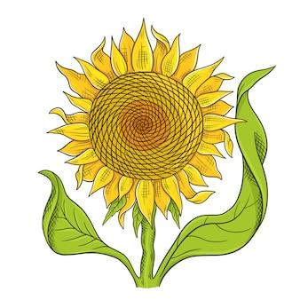 Esboço de desenho de flor de girassol. flor amarela com folhas verdes.