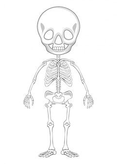 Esboço de desenho de um esqueleto humano