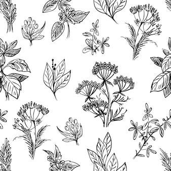 Esboço de ervas e flores sem costura padrão