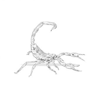 Esboço de escorpião arte linha gravura raster
