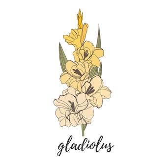 Esboço de ilustração vetorial desenhada à mão de gladíolo florescendo floral