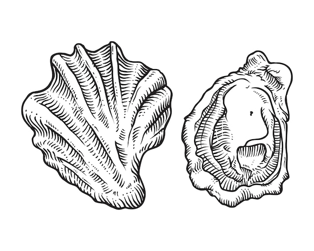 Esboço de mão desenhada ilustração de concha de ostra