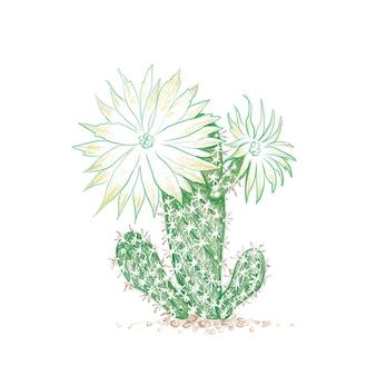 Esboço desenhado à mão da planta do cacto arthrocereus