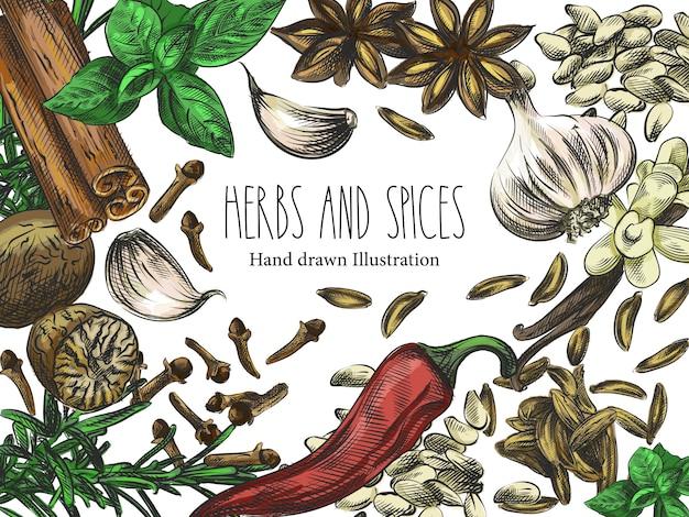 Esboço desenhado à mão em aquarela de ervas, especiarias e sementes. o conjunto é composto por sementes de girassol, alho, canela, badian, pimenta, cravo, manjericão, alecrim, baunilha, cravo, gergelim, cardamomo