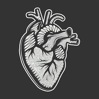 Esboço desenhado de coração anatômico
