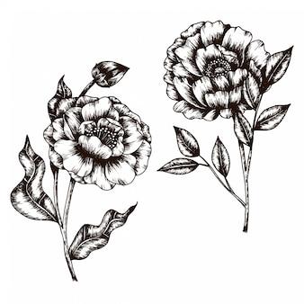 Esboço desenhado de mão da coleção de estilo vintage de flor