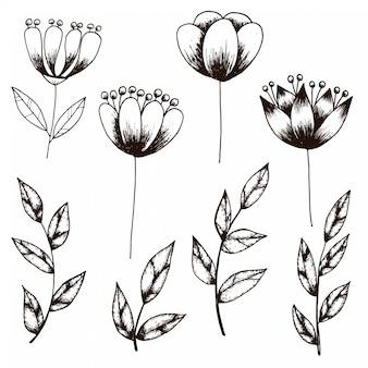 Esboço desenhado de mão da coleção de flor e folha estilo vintage