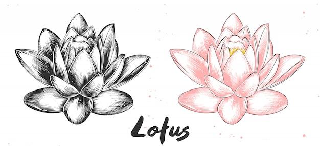 Esboço desenhado de mão da flor de lótus