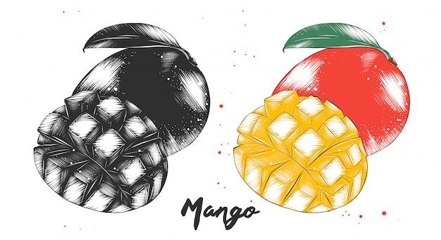 Esboço desenhado de mão da fruta da manga