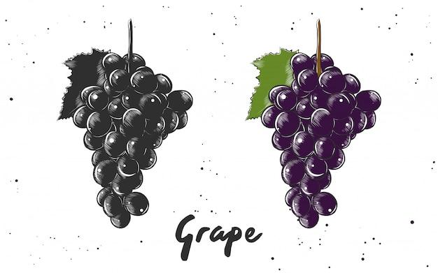 Esboço desenhado de mão da uva