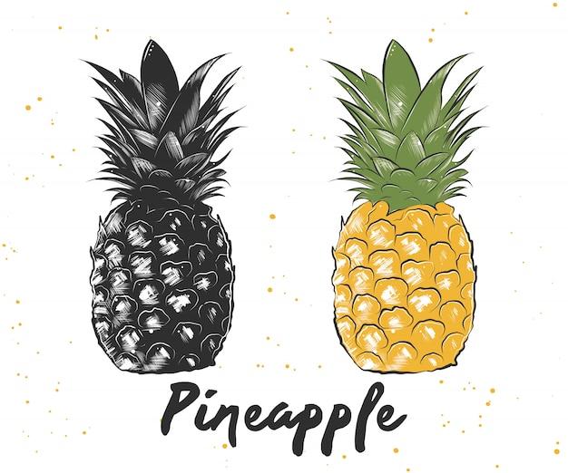 Esboço desenhado de mão de abacaxi