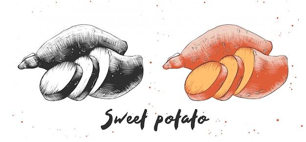 Esboço desenhado de mão de batata doce
