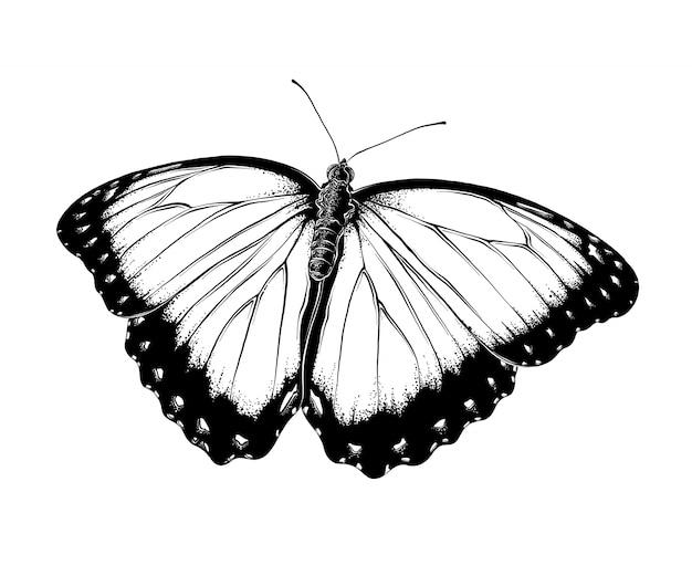 Esboço desenhado de mão de borboleta na cor preta, isolada.