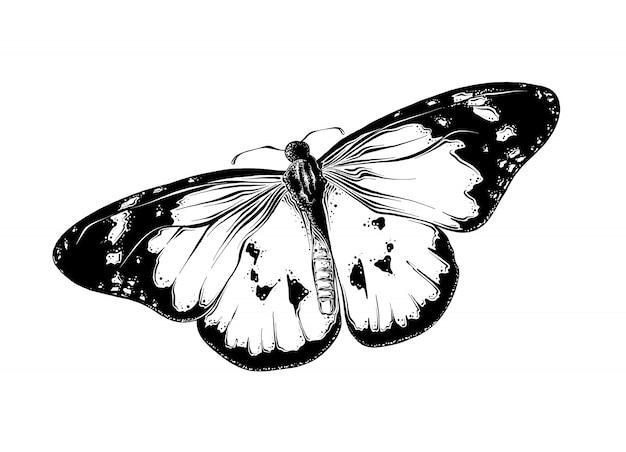 Esboço desenhado de mão de borboleta na cor preta. isolado no branco