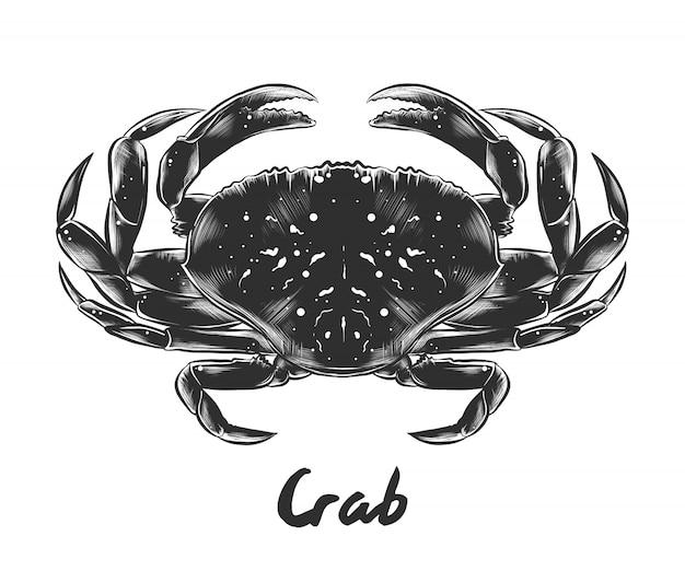 Esboço desenhado de mão de caranguejo em monocromático