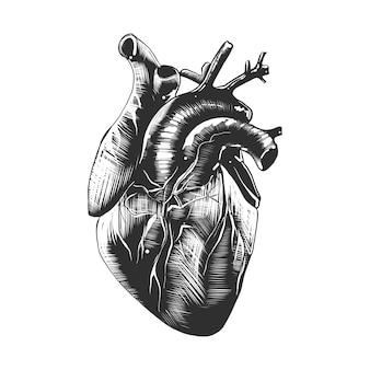 Esboço desenhado de mão de coração anatômico