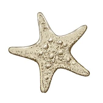 Esboço desenhado de mão de estrela do mar na cor, isolado. desenho detalhado estilo vintage. ilustração vetorial