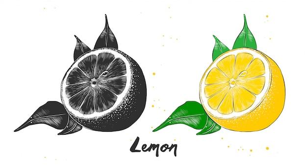 Esboço desenhado de mão de fruta limão