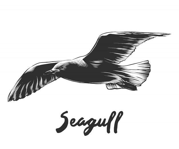 Esboço desenhado de mão de gaivota em preto e branco