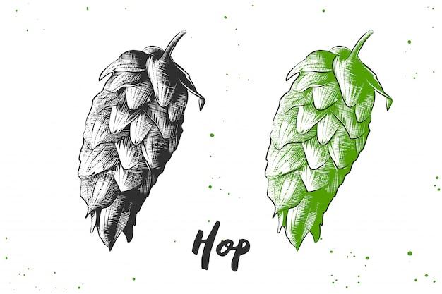 Esboço desenhado de mão de hop