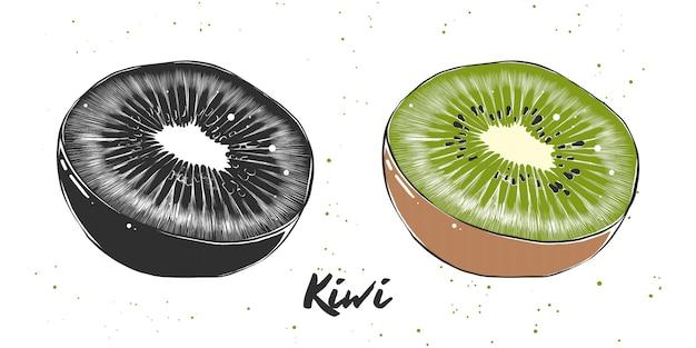 Esboço desenhado de mão de kiwi