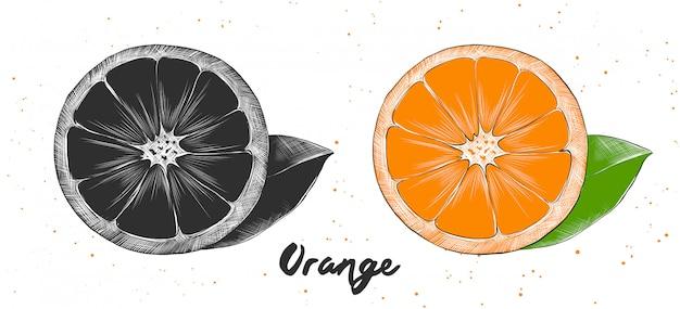 Esboço desenhado de mão de laranja
