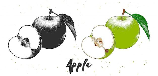 Esboço desenhado de mão de maçã