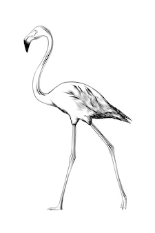 Esboço desenhado de mão de pássaro flamingo em preto