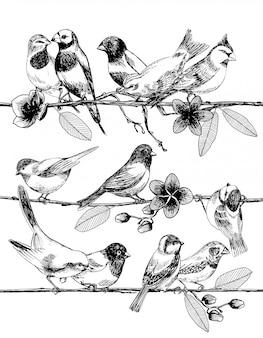 Esboço desenhado de mão de pássaros em galhos