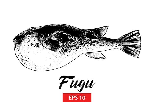 Esboço desenhado de mão de peixe fugu em preto