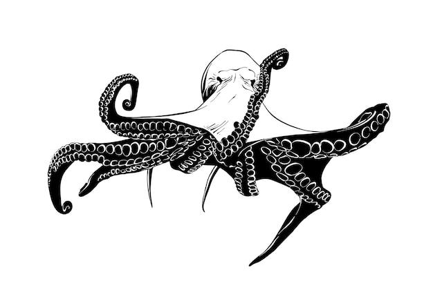 Esboço desenhado de mão de polvo em preto