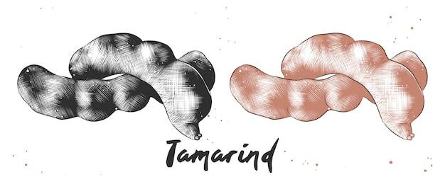 Esboço desenhado de mão de tamarindo