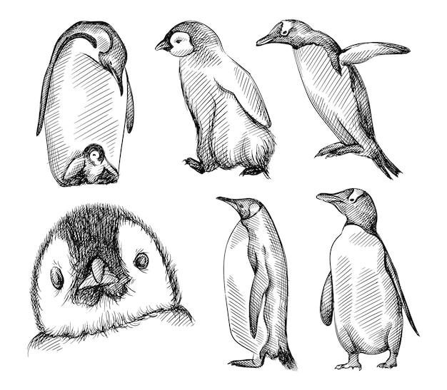 Esboço desenhado de mão de um conjunto de pinguins em um fundo branco. pássaro pinguim.
