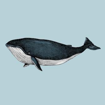 Esboço desenhado de mão de uma baleia