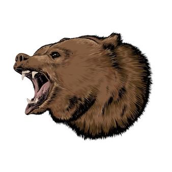 Esboço desenhado de mão de urso na cor isolado. desenho detalhado