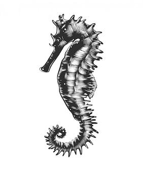 Esboço desenhado de mão do cavalo-marinho
