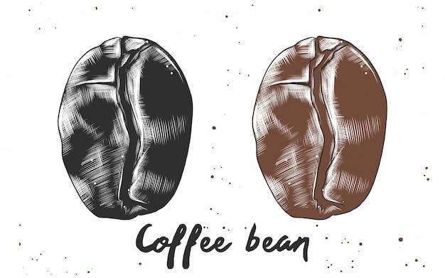 Esboço desenhado de mão do feijão de café