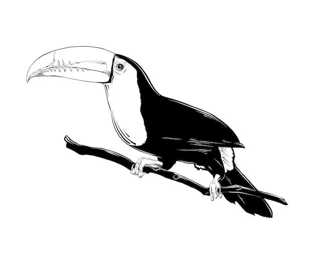 Esboço desenhado de mão do pássaro tucano brasileiro