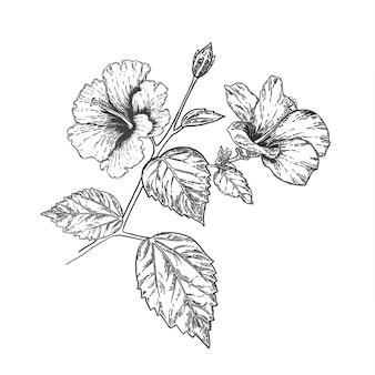 Esboço e mão que desenham a flor do hibiscus. ilustração em vetor arte linha.