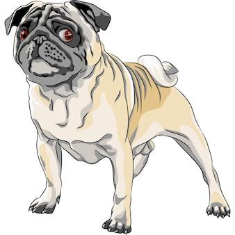 Esboço raça de pug de cachorro bravo