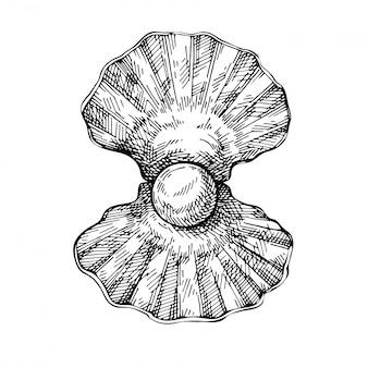 Esboço shell com pérola. concha desenhada de mão. estilo de gravura.