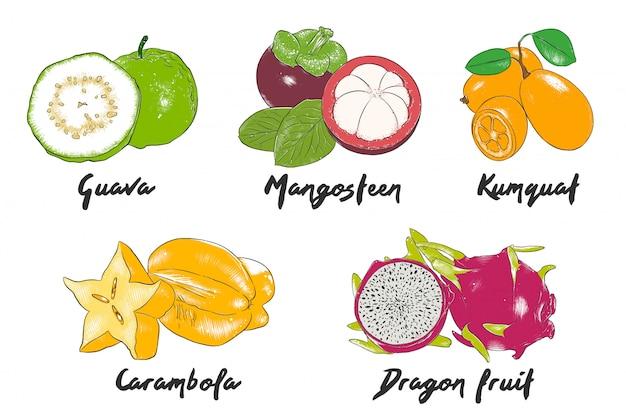 Esboços coloridos de frutas exóticas de mão desenhada